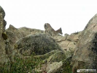 Sierra Porrones-Senda de las Cabras;rutas sierra de cazorla agencias de viajes en madrid batalla de